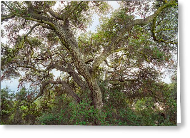 Greeting Card featuring the photograph Wild Green Yonder by Alexander Kunz