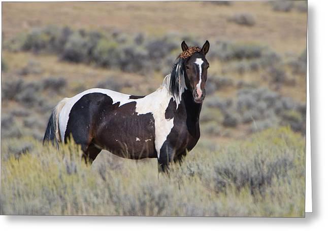 Wild Horse 14 Greeting Card