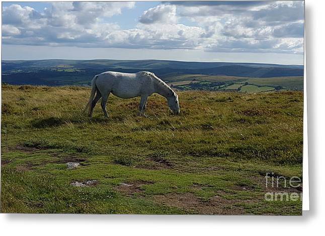 Wild Horse Greeting Card by Callum Hopkins