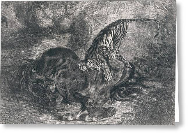 Wild Horse Felled By A Tiger Greeting Card