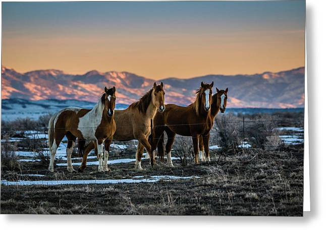 Wild Horse Group Greeting Card