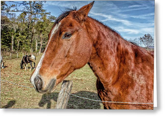 Wild Horse In Smoky Mountain National Park Greeting Card