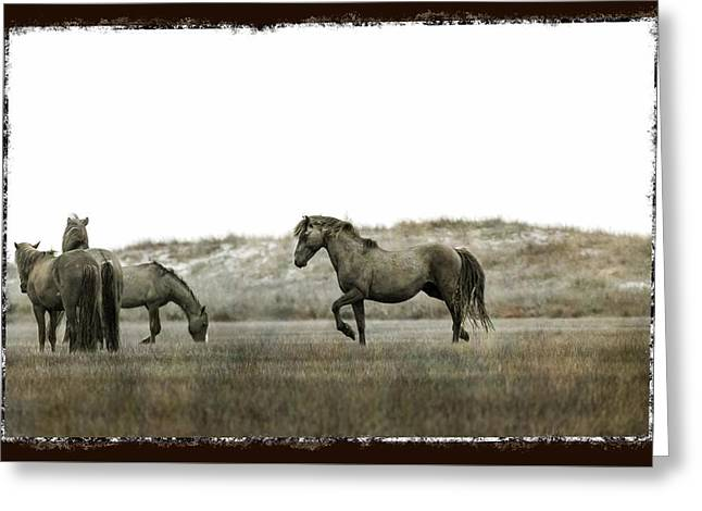 Wild Horse Series - Alpha Stallion Communication With The Band Greeting Card
