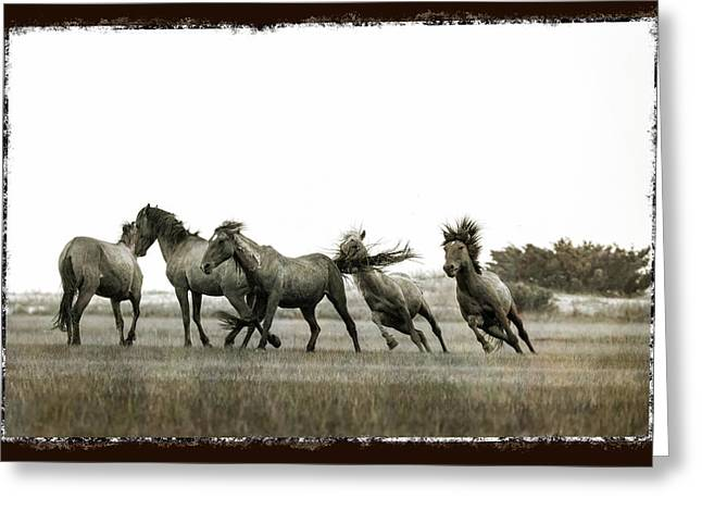 Wild Horse Series  - Chasing His Rival Greeting Card
