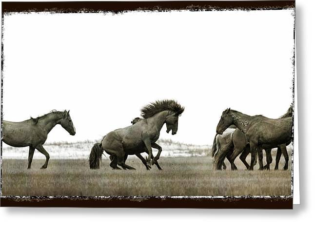 Wild Horse Series - Going After The Competition Greeting Card