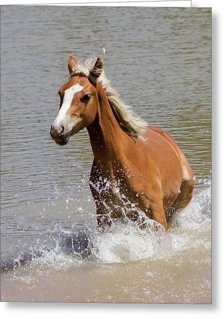 Wild Horse Splashing At The Water Hole Greeting Card