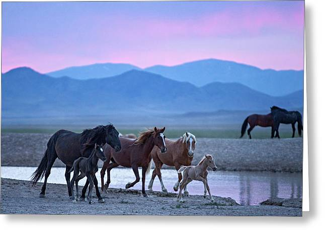 Wild Horse Sunrise Greeting Card