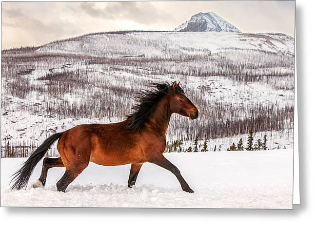 Wild Horse Greeting Card by Todd Klassy