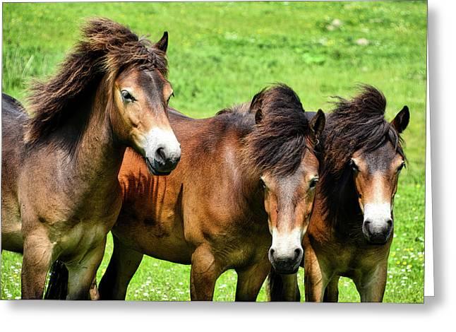 Wild Horses 2 Greeting Card