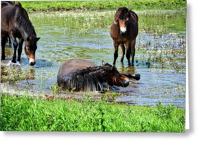 Wild Horses 3 Greeting Card