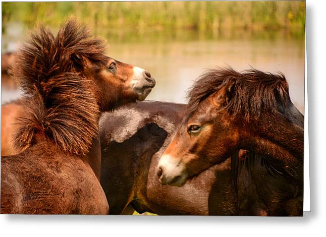 Wild Horses 5 Greeting Card