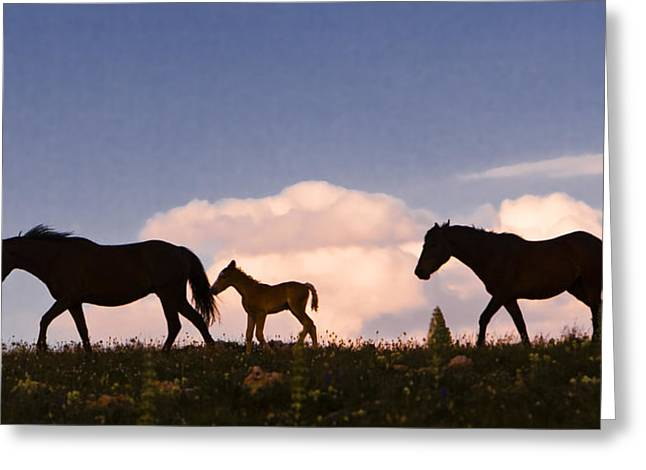 Wild Horses And Clouds Greeting Card