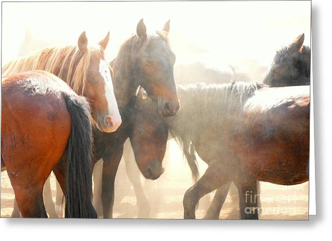 Wild Horses - Australian Brumbies 2 Greeting Card by Lexa Harpell