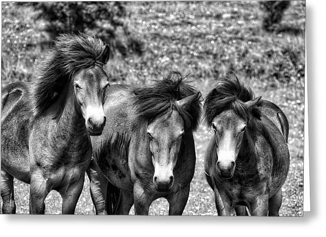 Wild Horses Bw1 Greeting Card