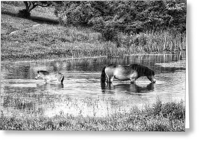 Wild Horses Bw2 Greeting Card