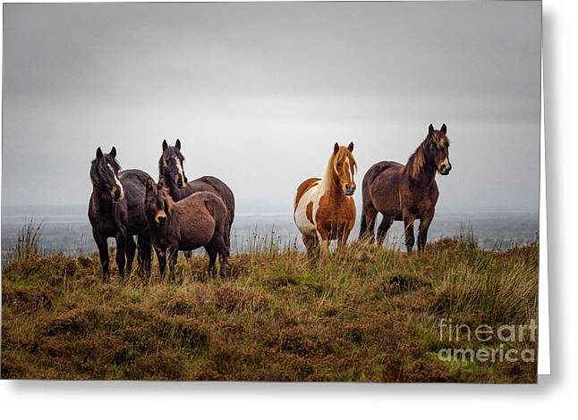 Wild Horses In Ireland Greeting Card