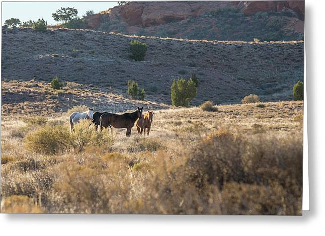 Wild Horses In Monument Valley Greeting Card by Jon Glaser