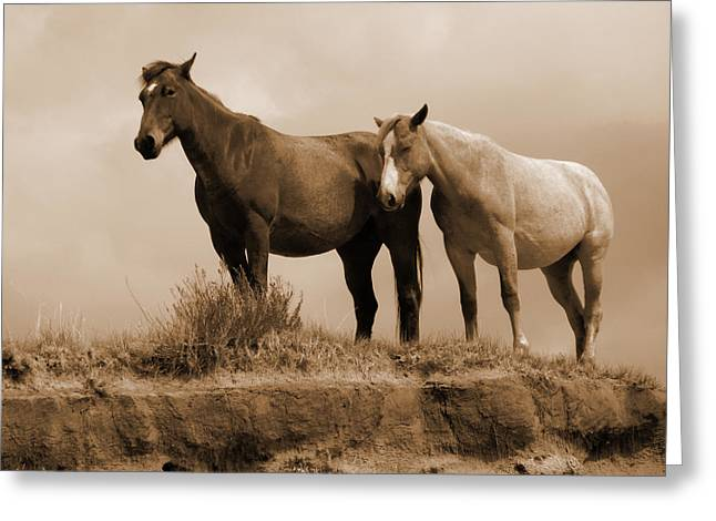 Wild Horses In Western Dakota Greeting Card