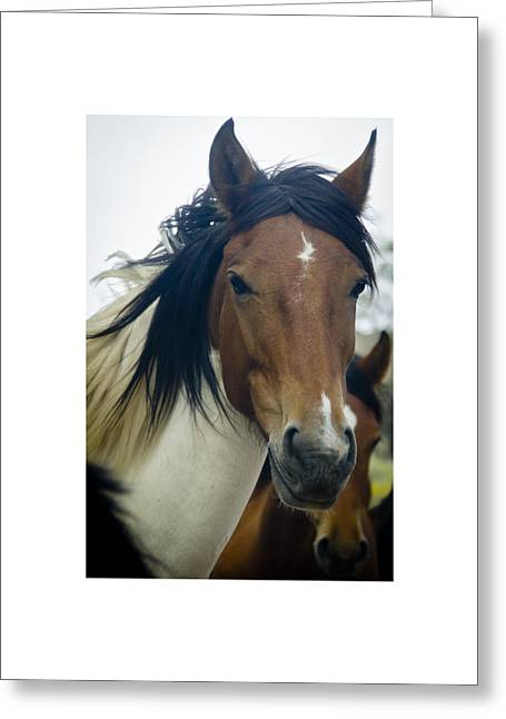 Greeting Card featuring the photograph Wild Horses Of Nevada 1 by Catherine Sobredo