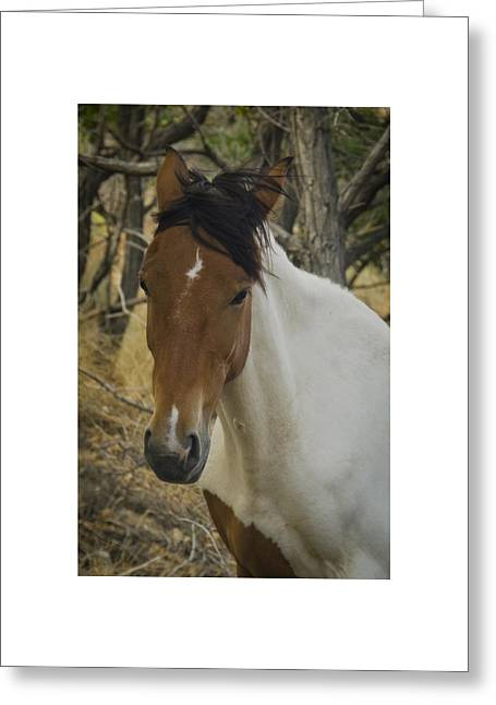 Greeting Card featuring the photograph Wild Horses Of Nevada 3 by Catherine Sobredo