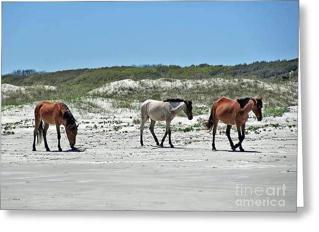 Wild Horses On The Beach Greeting Card