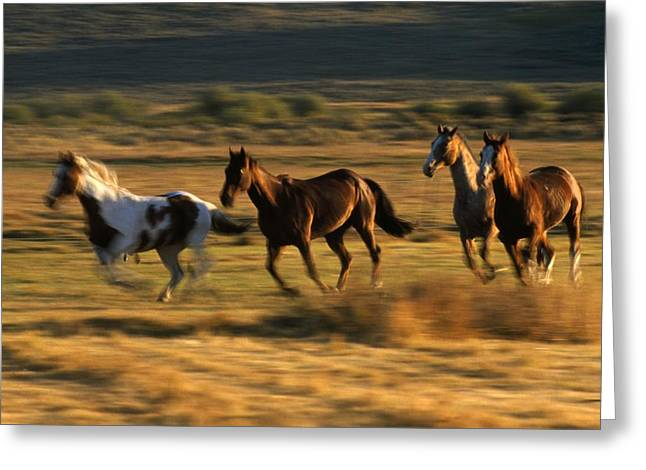 Wild Horses Running Together Greeting Card