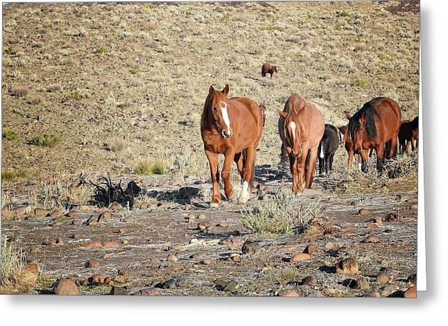 Wild Horses Greeting Card