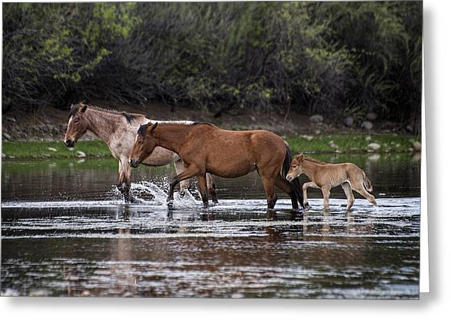 Wild Horses Walking Greeting Card
