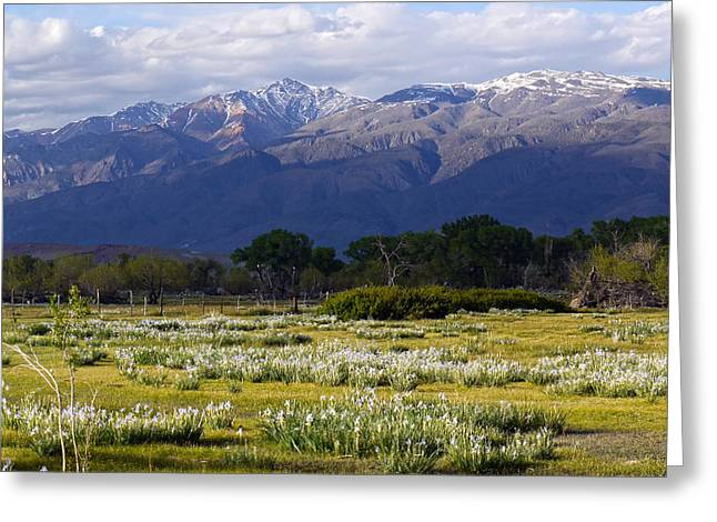 Wild Iris And The White Mountains Greeting Card