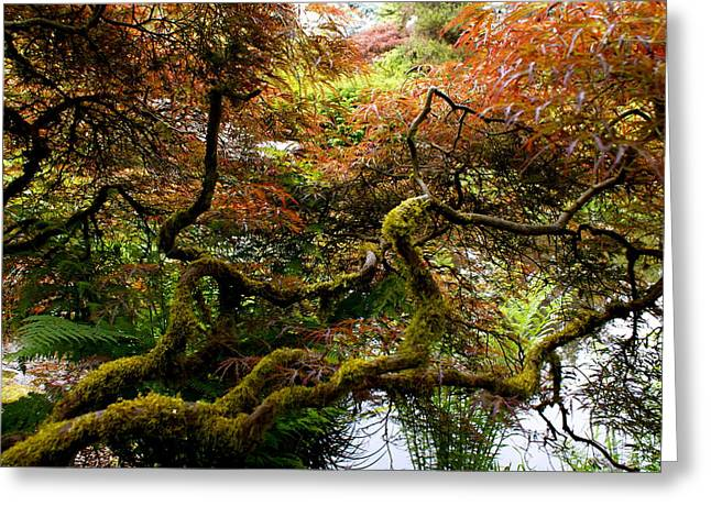 Wild Japanese Maple Greeting Card by Sonja Anderson