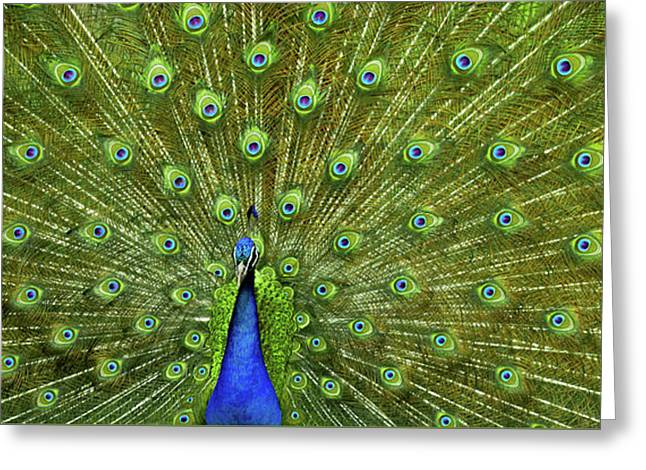 Wild Kingdom Greeting Card by Karen Wiles