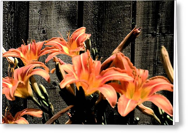 Wild Lily's Greeting Card by Richard N Watkins