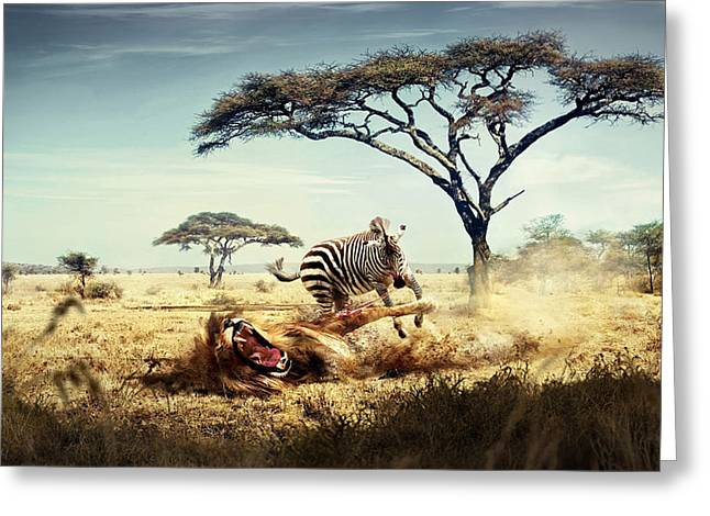 Wild Lion Zebra Chase Greeting Card