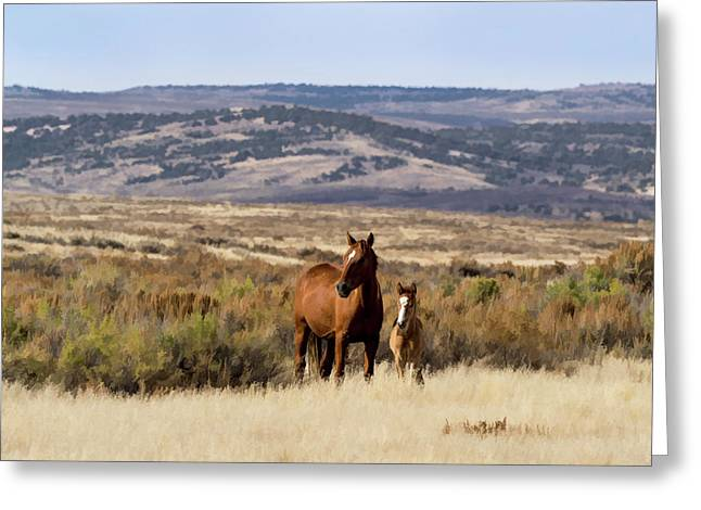 Wild Mare With Young Foal In Sand Wash Basin Greeting Card