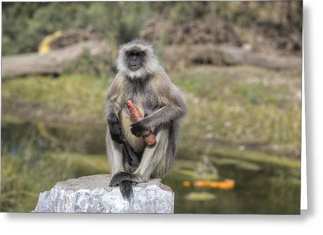 wild monkey in Rajasthan - India Greeting Card