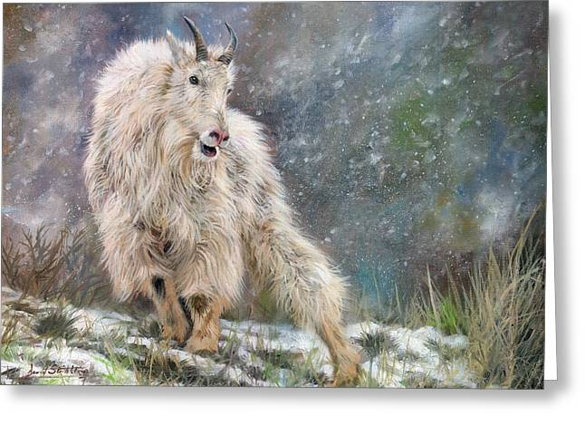 Wild Mountain Goat Greeting Card by David Stribbling