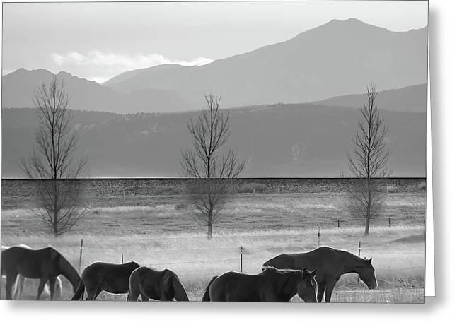 Wild Mountain Horses - Rocky Mountains Colorado - Black And White Square Greeting Card
