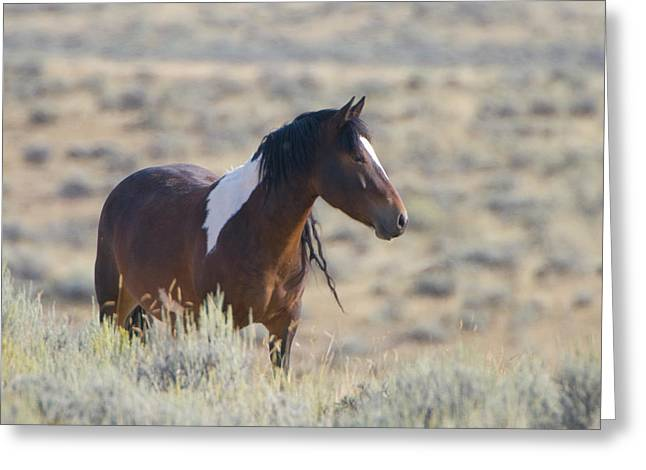 Wild Mustang 1 Greeting Card