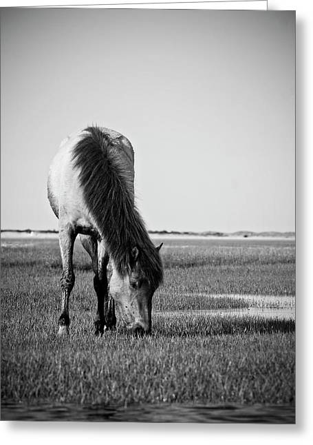 Wild Mustang Greeting Card