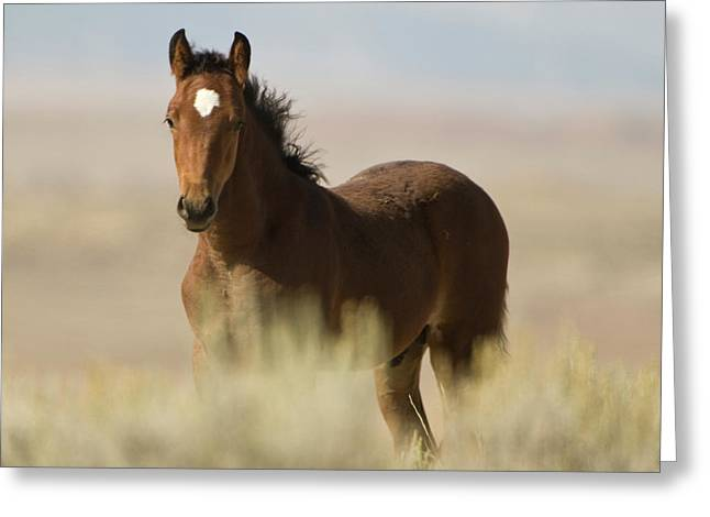 Wild Mustang Colt Greeting Card