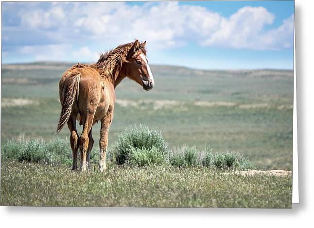 Wild Mustang Colt Of Sand Wash Basin Greeting Card