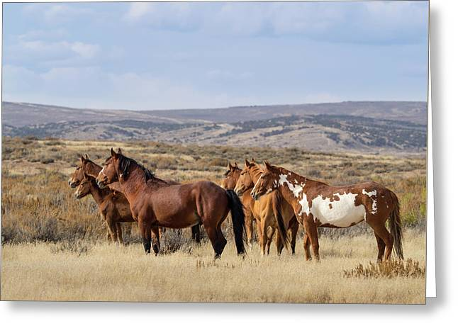 Wild Mustang Family Band In Sand Wash Basin Greeting Card