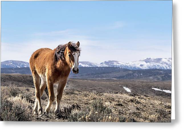 Wild Mustang Filly Of Sand Wash Basin Greeting Card