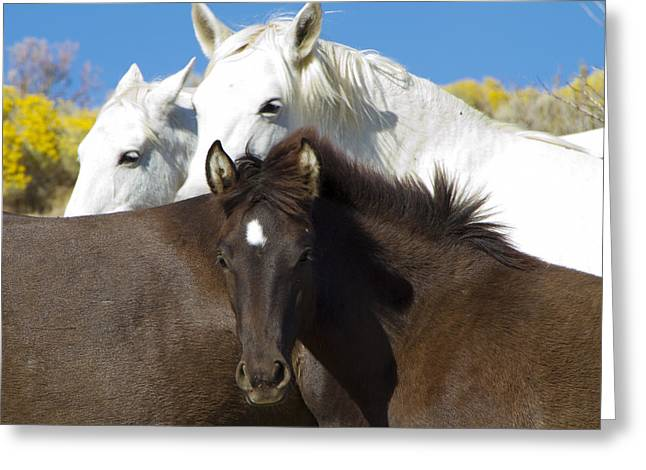 Wild Mustang Herd Greeting Card