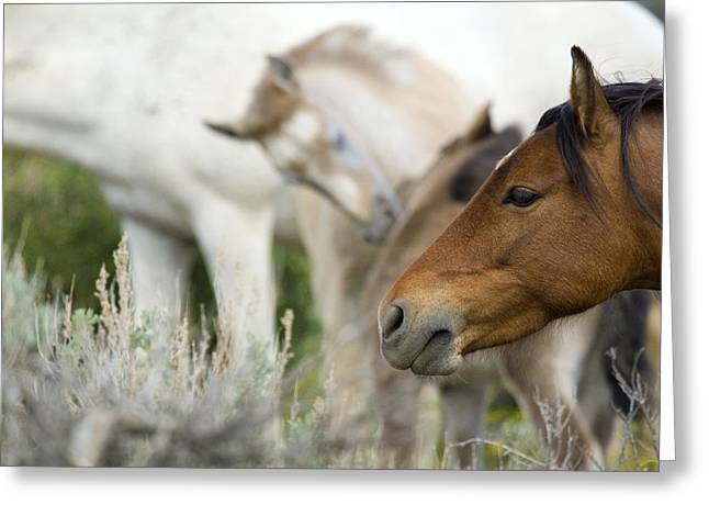 Wild Mustang Horses Greeting Card