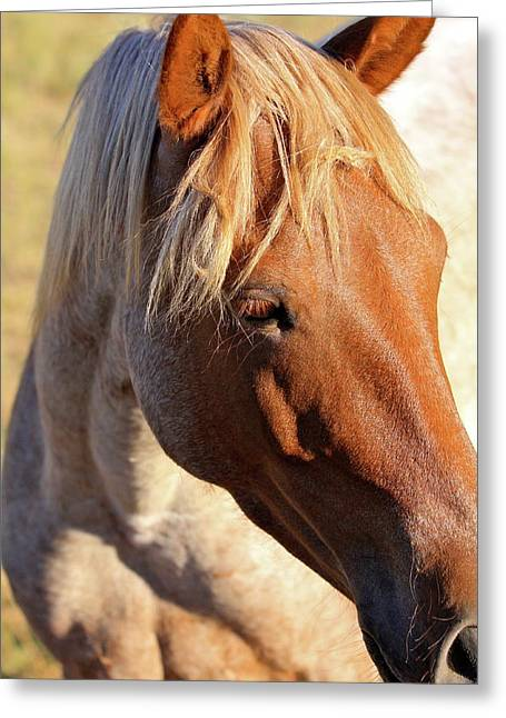 Wild Mustang Greeting Card by Kate Purdy