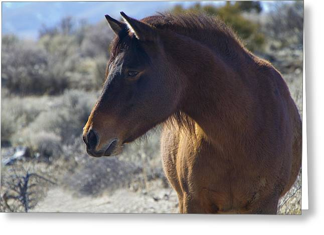 Wild Mustang Mare Greeting Card