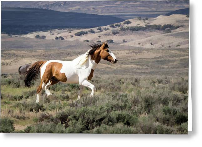 Wild Mustang Stallion On The Move In Sand Wash Basin Greeting Card