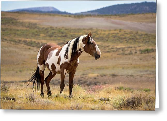 Wild Mustang Stallion Picasso Of Sand Wash Basin Greeting Card