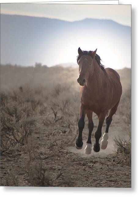 Wild Mustang Stallion Running Greeting Card